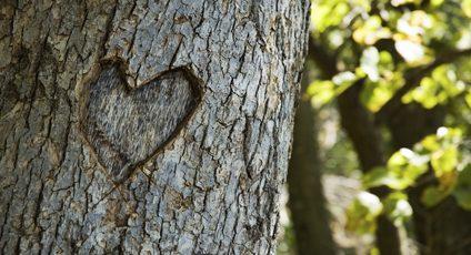 Photographie d'un coeur gravé dans un arbre