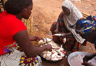 Photographie de trois femmes qui préparent le poisson qu'elles vendront